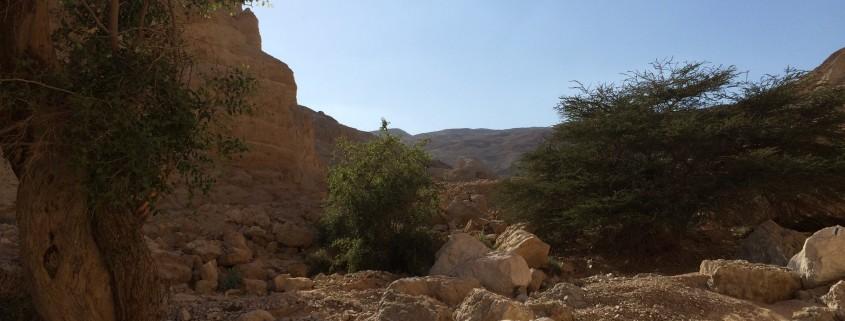 2015-03-Wadi