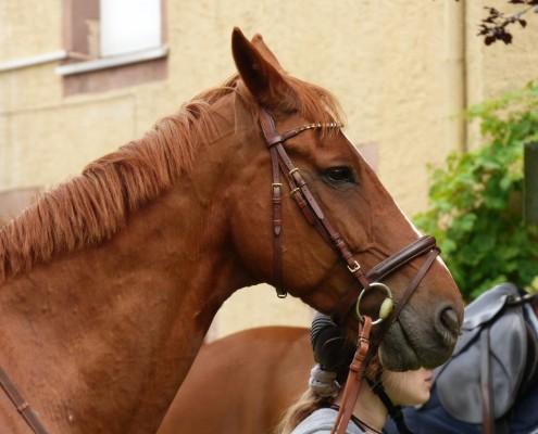 Pferdesegnung